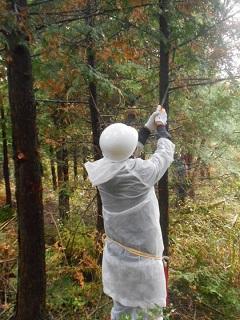 富士山「緑の募金の森」緑化活動