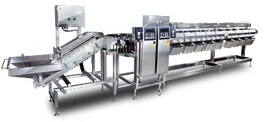 冷凍ホタテ用オートチェッカ - Grading System for Frozen Scallops